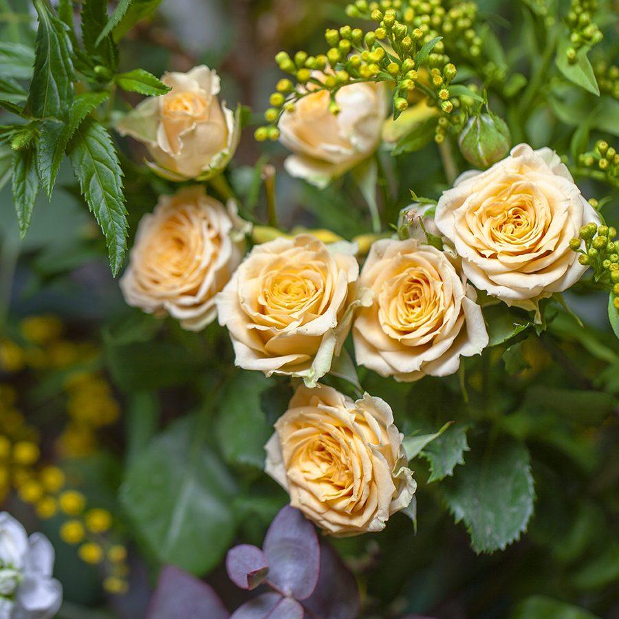rosas-valencia