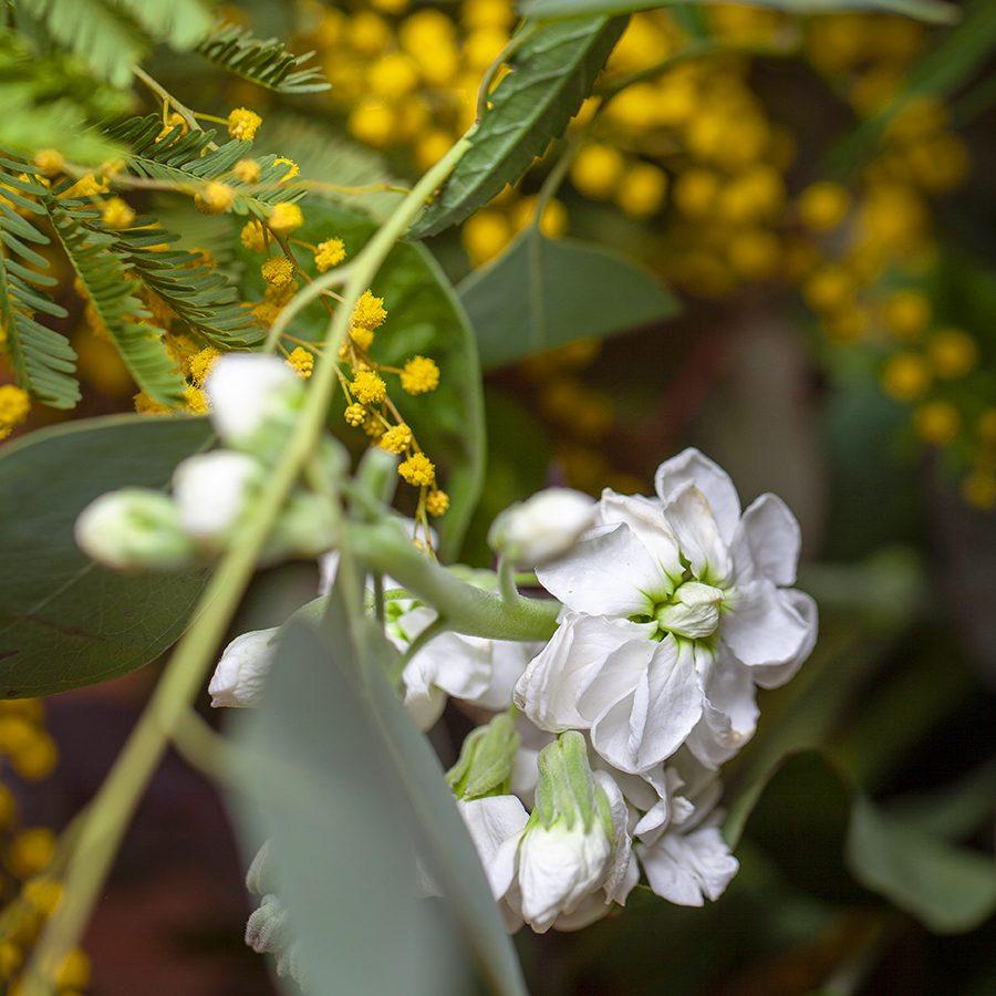 centro-flor-campestre-valencia