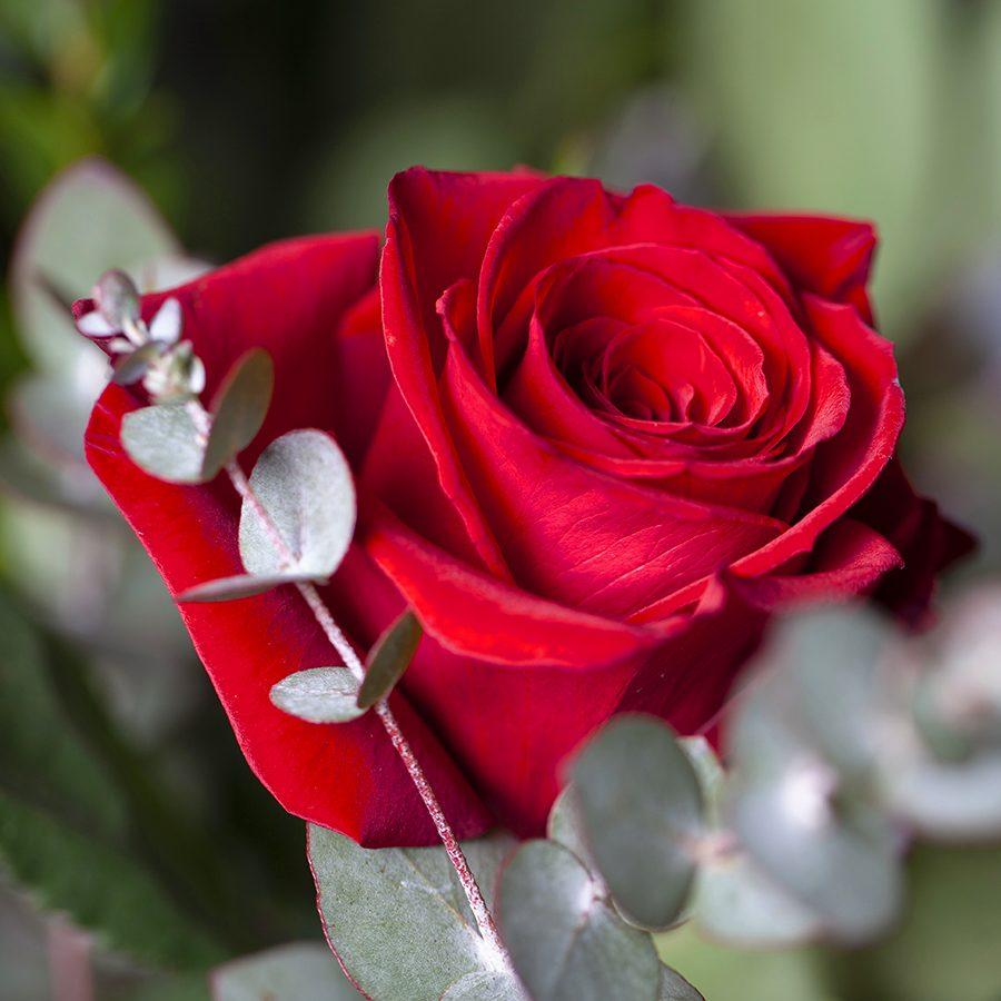 ramos-rosas-rojas-valencia