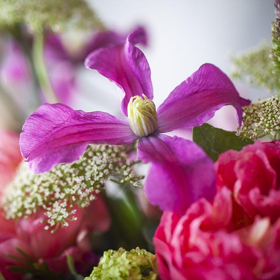 flores-colores-valencia