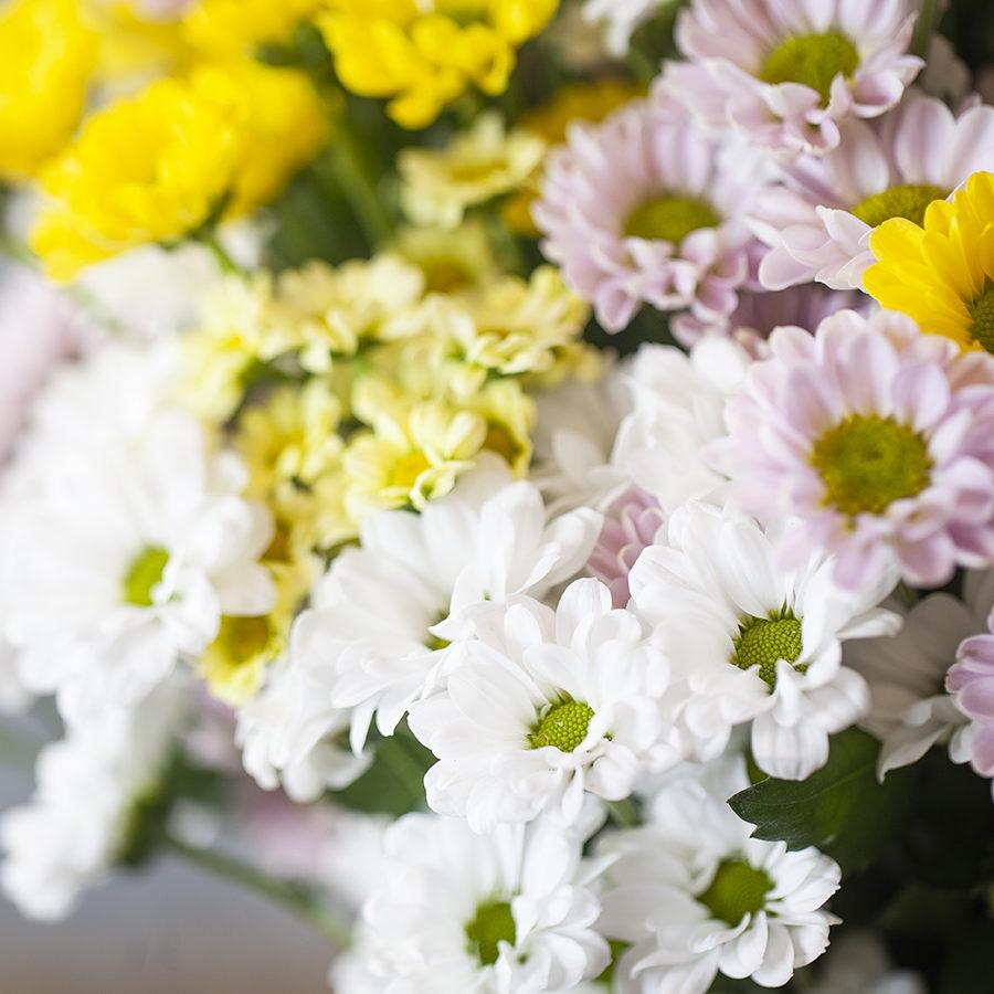 flores-naturales-margaritas
