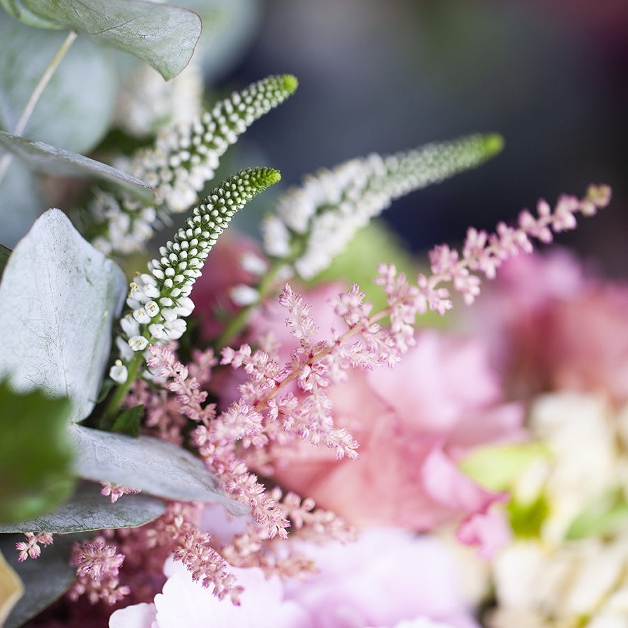 flores-naturales-coral