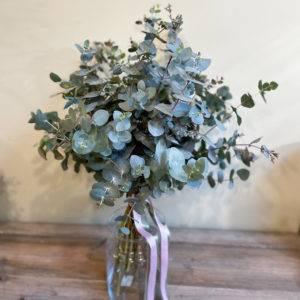 comprar-eucalipto