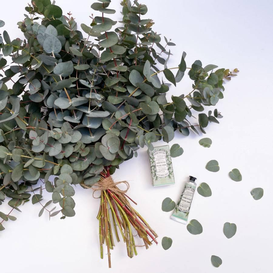 set-eucalipto-regalar