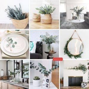 decoración-eucalipto-casa
