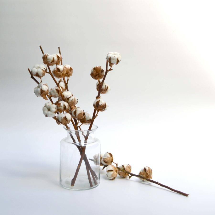 algodon-decoracion