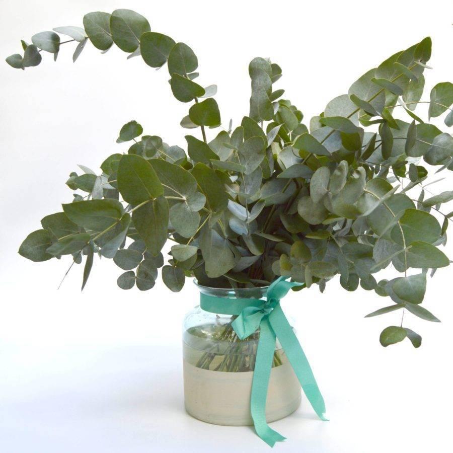 ramo-eucalipto-atelier